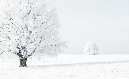 'snow maiden': Frozen trees in white snowy field