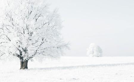 bosque con nieve: �rboles congelados en un campo cubierto de nieve blanco