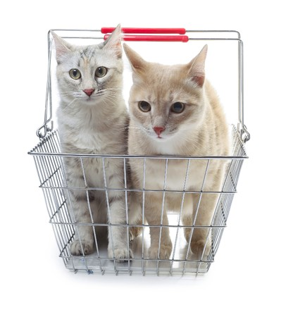 Two cats sitting in metal basket photo