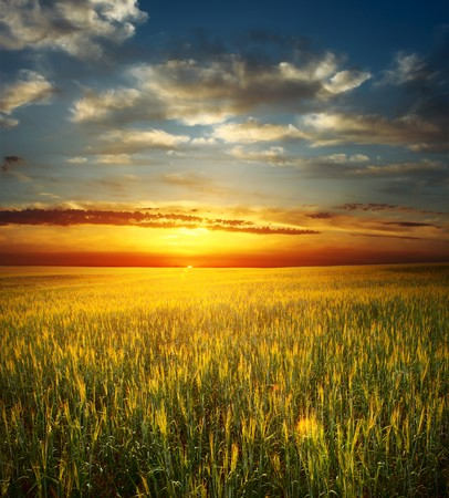 Sunset over field with wheat Stock Photo - 7470127