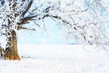 snowy field: Part of frozen tree and blue sky