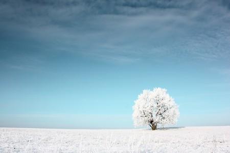 Alone frozen tree in snowy field photo