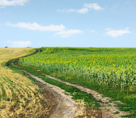 Rural road between wheat and sunflowers fields Stock Photo - 7556870