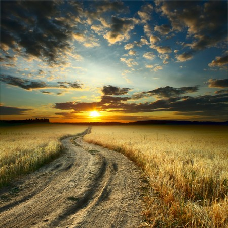 Road in field with ripe yellow wheat Stock Photo - 7556876