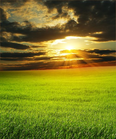 Sunset over green rural field photo