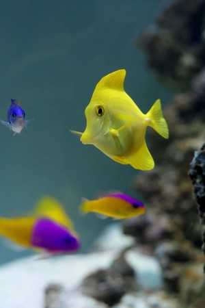 Group of colored fishes in aquarium Stock Photo - 7585214