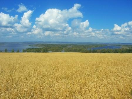 lea: Wheat lea and blue sky