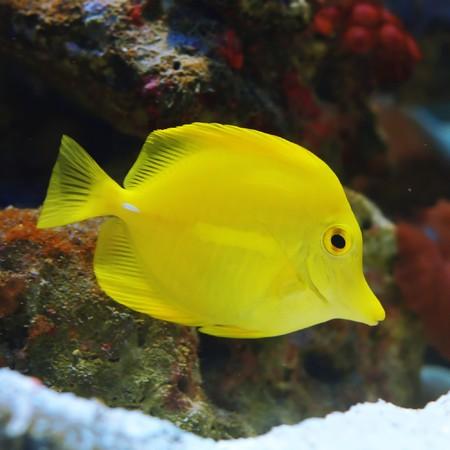 Fish Stock Photo - 7583159
