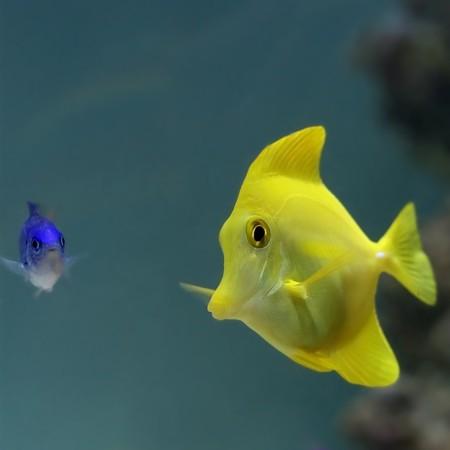 Fish Stock Photo - 7583079