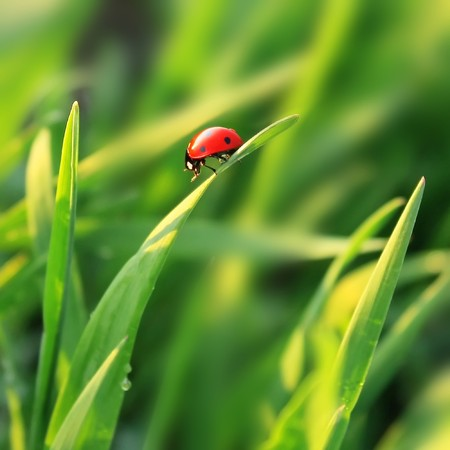 Ladybird on grass blade Stock Photo - 7583149