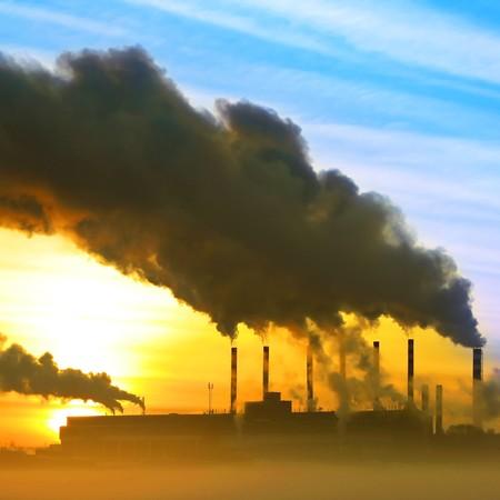 Plant with smoke Stock Photo - 7583411