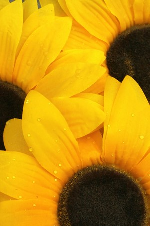 Artificial sunflowers with water drops on petals photo