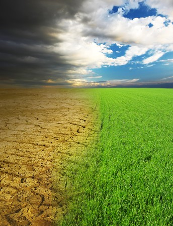 Dry desert and green fresh grass photo