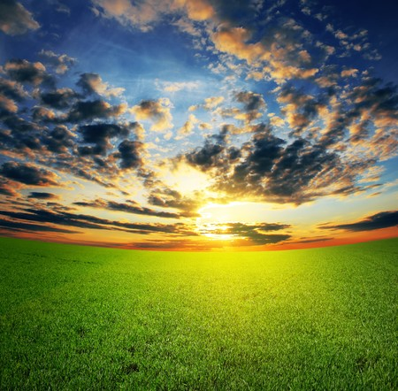 Sunset over field with grass photo