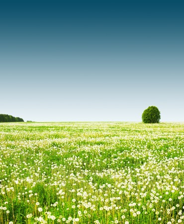 Rural field with flowers and trees under clear sky photo