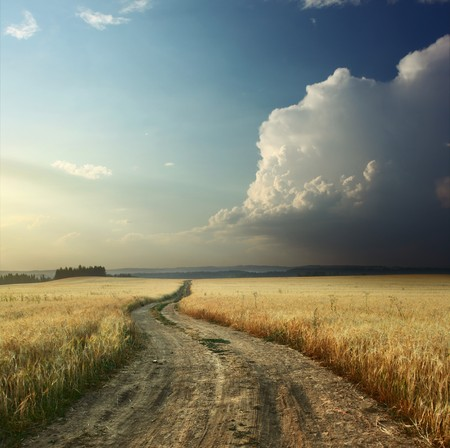 Road in field with ripe wheat and blue sky with clouds Stock Photo - 7600042