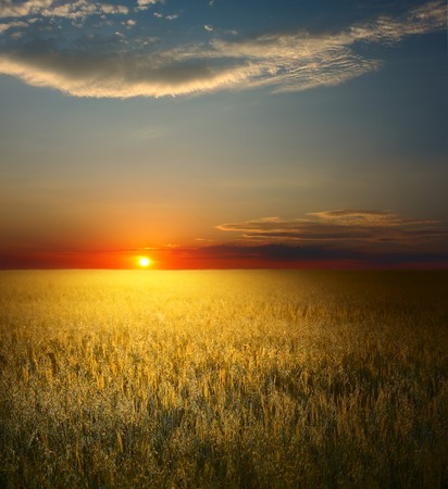 Sunset over field with wheat Stock Photo - 7600142