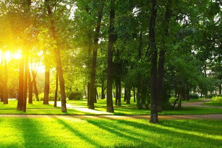 arboleda: Puesta de sol en el parque con �rboles y c�sped verde  Foto de archivo