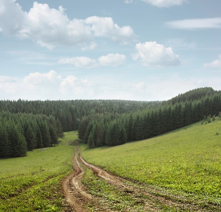 Rural road in meadow near forest photo