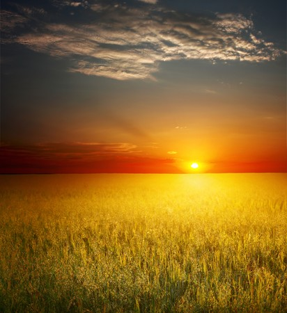 Sunset over field with wheat Stock Photo - 7600178