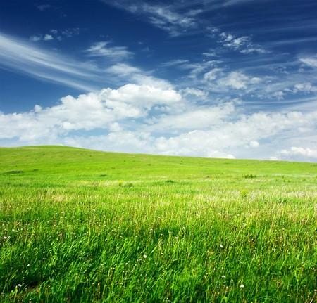 herbs wild: Prado con hierbas silvestres y cielo azul con nubes