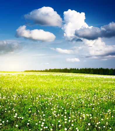 Meadow with dandelions and wild herbs with blue sky and clouds photo