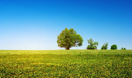 Green meadow with flowers and group of trees over clear blue sky background photo