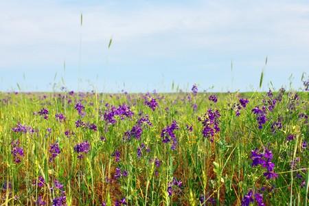 herbs wild: Hierbas silvestres y el trigo se deriva de la pradera