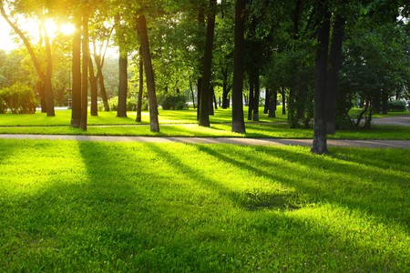 forest park: Green lawn in city park under sunny light