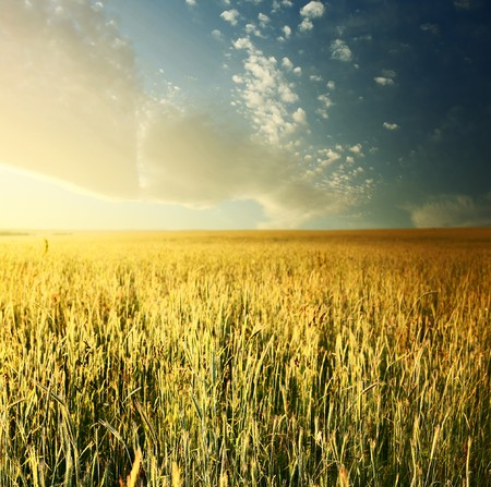 rowth: Sunrise over field with wheat