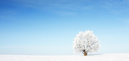 Alone frozen tree in snowy field and clear blue sky Stock Photo - 7600082