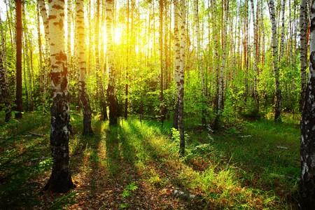 foresta: Alla luce del sole nella foresta