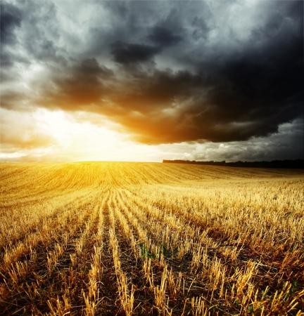 嵐の暗い雲と小麦の茎を持つフィールドの上に光 写真素材