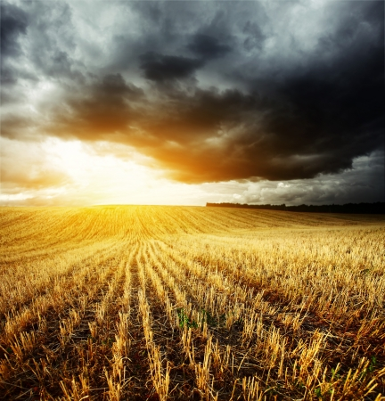 storm clouds: Storm dark clouds and light over field with wheats stems