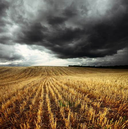 storm clouds: Storm dark clouds over field with wheats stems