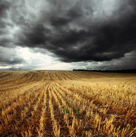 cielo tormenta: Tormenta de nubes oscuras sobre campo con tallos de trigo
