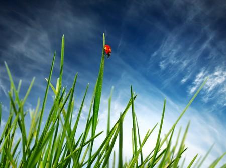 Ladybird on green grass Stock Photo - 7791105