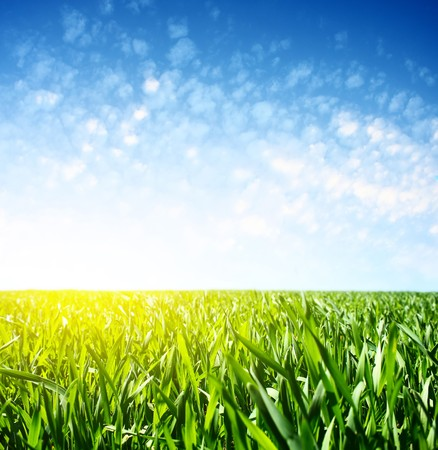 Green grass and blue sky with clouds and light photo