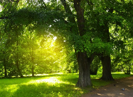 night spot: Green trees in park and sunlight