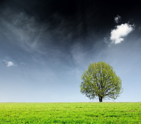 Alone tree on green meadow and sky with clouds photo