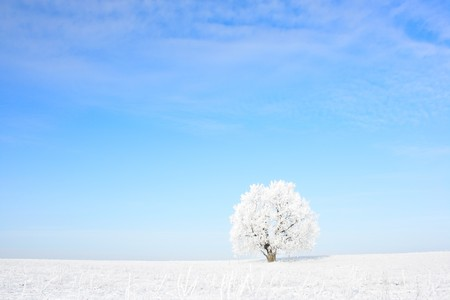 Alone frozen tree and clear blue sky photo