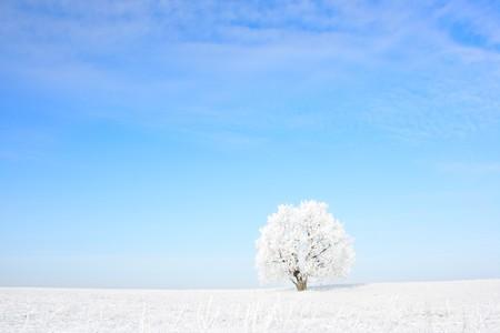 Congelati solo albero e chiaro cielo blu