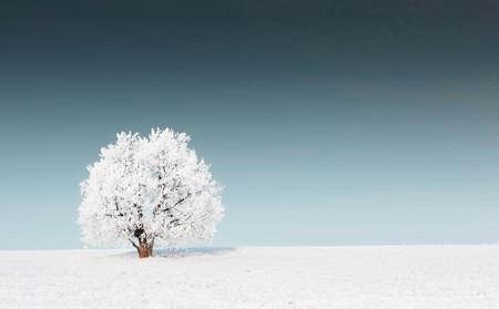 snowy field: Alone frozen tree on snowy field and dark sky Stock Photo