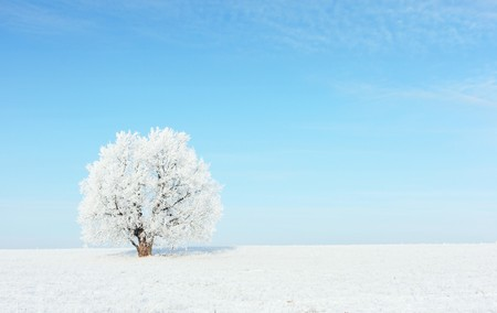 december: Alone frozen tree on snowy field and clear blue sky