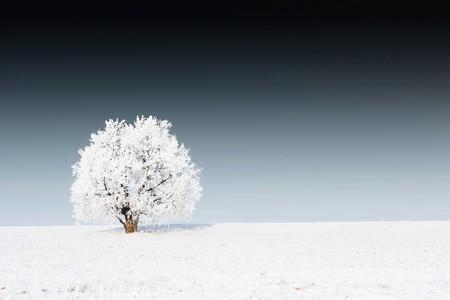 Alone frozen tree on snowy field and dark sky photo