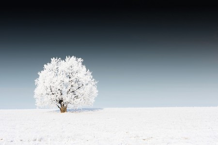snowstorm: Alone frozen tree on snowy field and dark sky Stock Photo