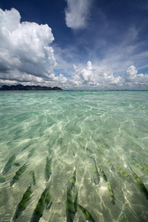 Transparent sea water with fish and blue sky with clouds Stock Photo - 8333402