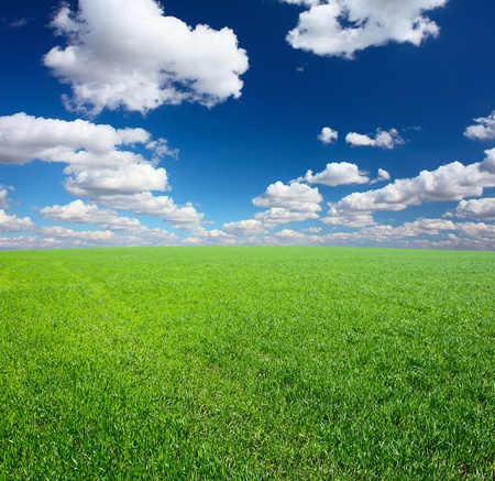 green wheat: Green grass and blue sky with clouds