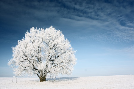 Frozen tree on winter field and blue sky Stock Photo - 8323294