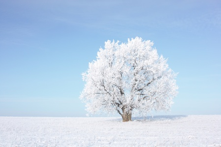 Frozen tree on winter field Stock Photo - 8323304